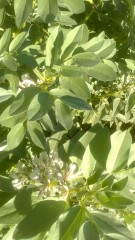 cultivo-huerto-valencia