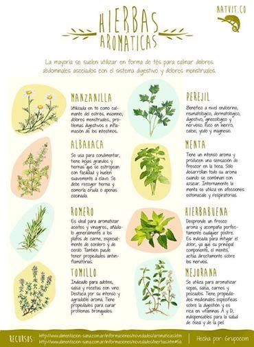 plantas-aromaticas-huerto