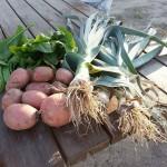 verduras-hortalizas-ecologicas