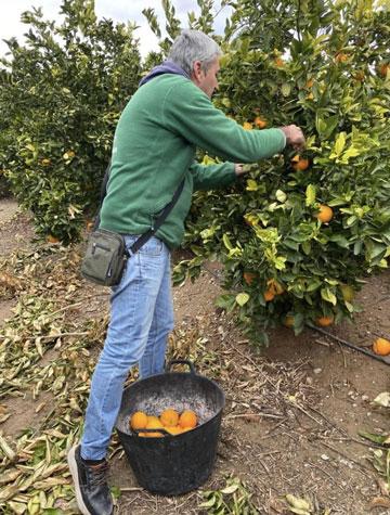 carlos-recolectando-naranjas