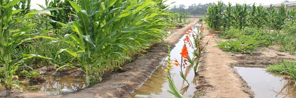 huertos-ecologicos-valencia